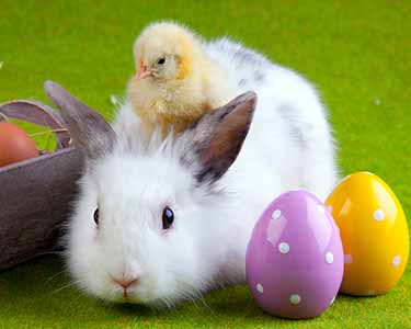 Kids Gainesville: Easter Bunny Events - Fun 4 Gator Kids